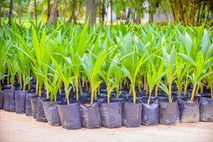 Growrite Substrates initiates coconut planting program 'Anagathaya Wawamu'